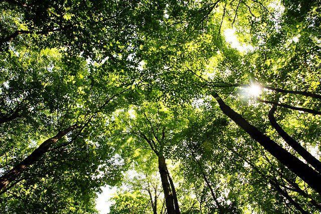 Tree canopy seattle